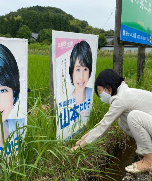 今日は綾部でポスターの貼り替え、草抜き作業してます。