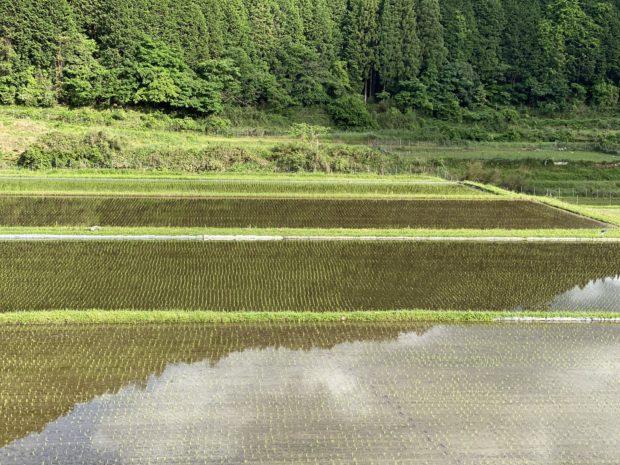 福知山市夜久野町、田んぼの風景。